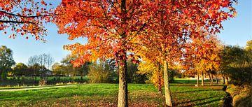 Herfst Landschap met rode bomen van