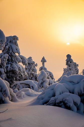 Goldener Sonnenaufgang im Schnee
