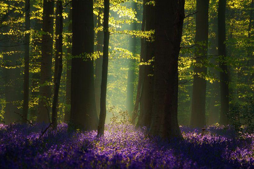 The Blue Forest van Martin Podt