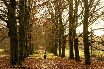 The Road to Happiness van Floris van Woudenberg