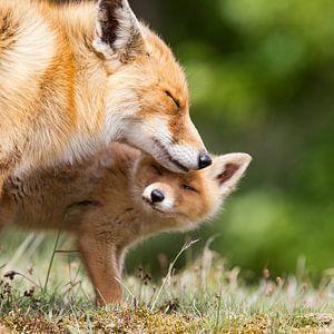 Moeder vos met haar welp