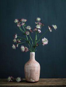 Stilleben mit Astrantia-Zeeuws-Knoten von Karin Bazuin