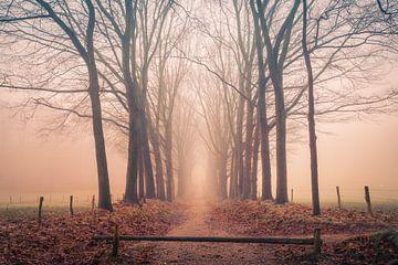 Sentier forestier par un matin brumeux sur Mayra Pama-Luiten