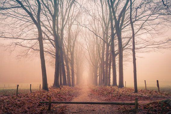 Bospad op een mistige ochtend van Mayra Pama-Luiten