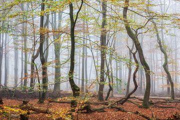 Cueillette d'automne d'origine sur Lars van de Goor