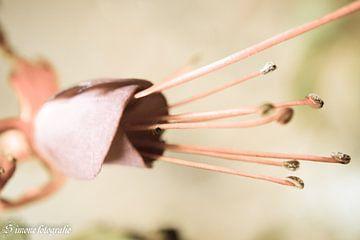 geschlossene Blume von Simone van der Heide