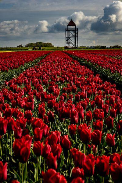 rode tulpen voor de toren van peterheinspictures
