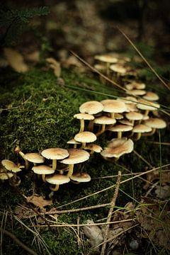 Gruppe von weissen Pilzen auf dem Moos | Naturfotografie von Diana van Neck Photography