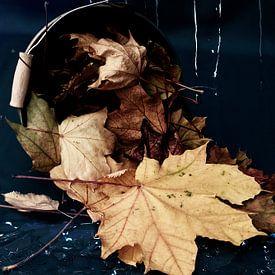 Feuilles d'automne sur Stefanie Keller