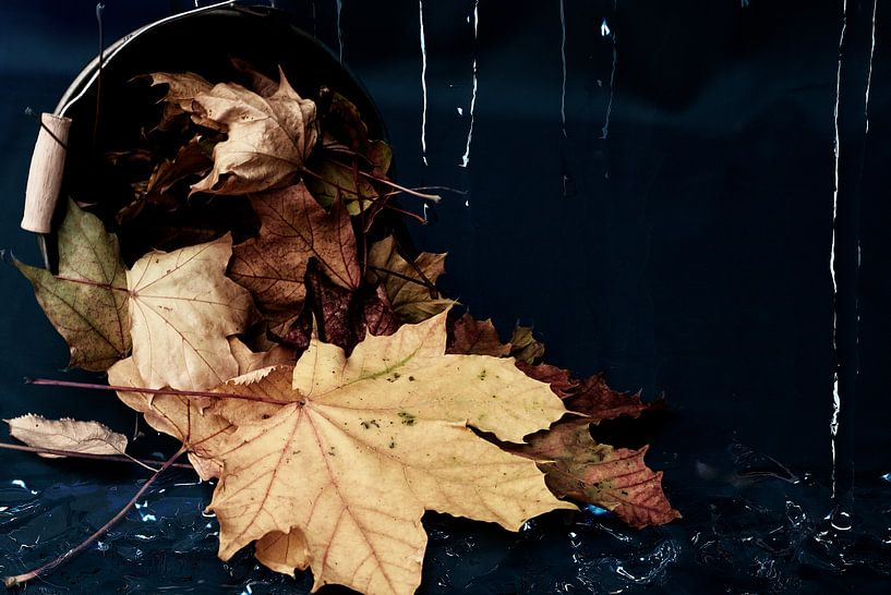 Herbstblätter von Stefanie Keller