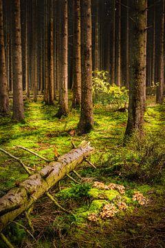 Ardennense Bos van Sander Poppe
