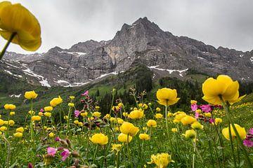Trollenbloemen in de Karwendel van Fabian Roessler
