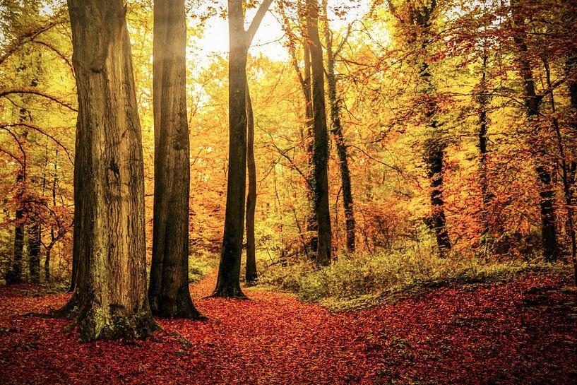 Herfst - Fall of Enchantment van Cho Tang