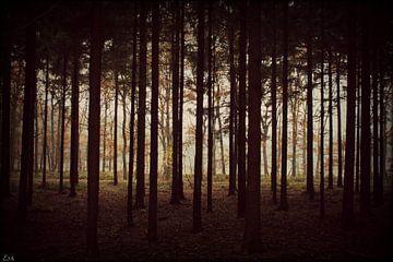 Forrest. von Esh Photography
