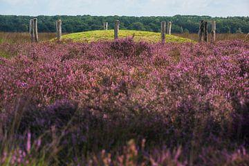 Regte Heide,  grafheuvel met heide van Blond Beeld