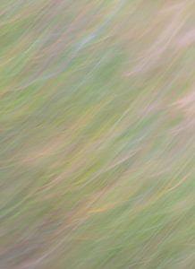 herbe abstraite sur Tania Perneel
