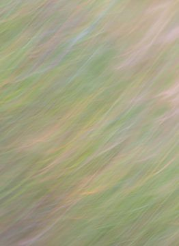abstract gras van Tania Perneel