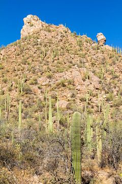 Landschapsimpressie van het Saguaro Nationaal Park van Melanie Viola
