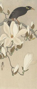 Myna auf einem Magnolienzweig von Ohara Koson