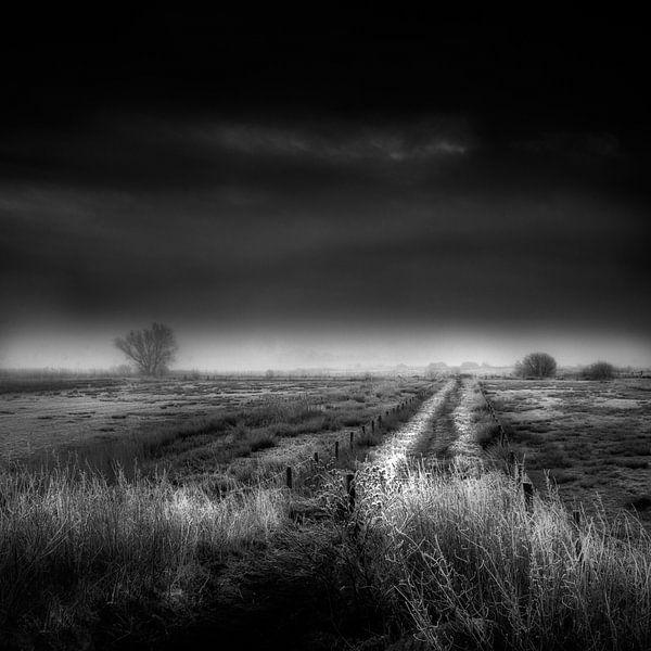 Throught the fields van Ruud Peters