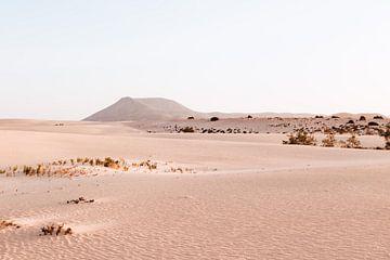 Dünenpark auf Fuertenventura, Kanarische Inseln von Simone Neeling