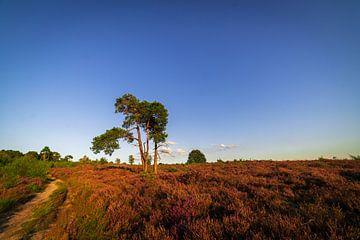 Baum und Moor Holterberg von Arnold van Rooij