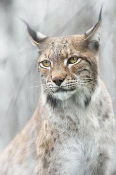 Lynx portret in de mist, Santiago Pascual Buye van 1x