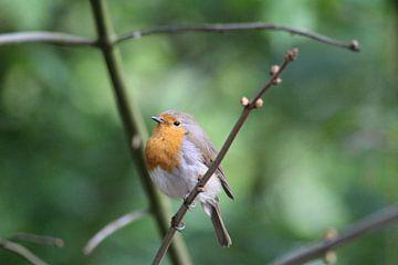 Het vogeltje van Simon Breur