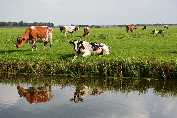 Weiland met koeien van Maurice Kruk