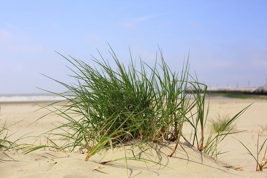 Helmgras op het strand van LHJB Photography