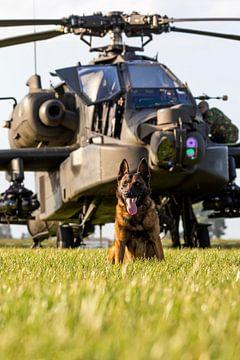 Een hond van de Luchtmacht beveiliging beveiligd een Apache helikopter van Jimmy van Drunen