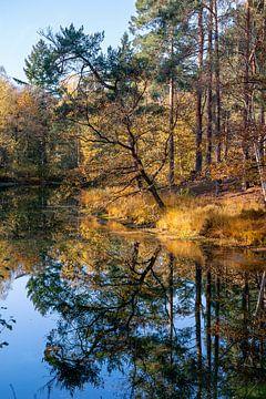 Reflectie van bomen in water in bos tijdens de herfst, meer in het woud van Utrechtse heuvelrug, Utr van John Ozguc