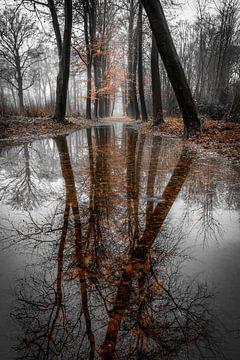 Entre l'automne et l'hiver... (2) sur Peter Korevaar