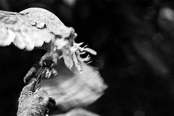 Birds of prey von Mees Tempelaar