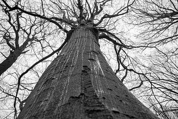 trauriger Baum im Regen von scott van maurik