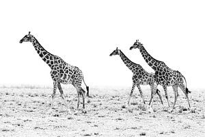 Giraffenwanderung van