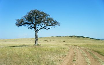 Afrikaanse savanna Masai Mara - Kenia van