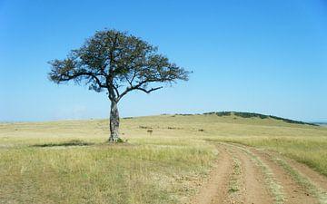 Afrikaanse savanna Masai Mara - Kenia van Gerrit  De Vries