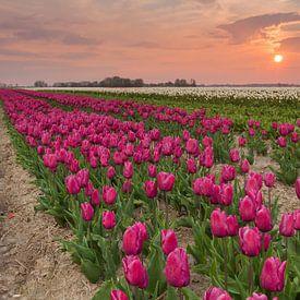 Sunset at Zijldijk van Ron Buist