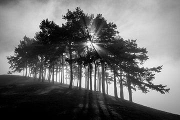 Tomes in de mist - Swabian Alb van Jiri Viehmann