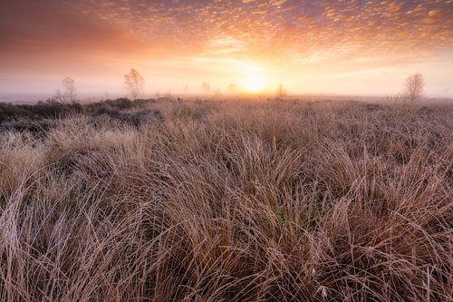 Een mooie ochtend op het Balloërveld, Drenthe - Nederland