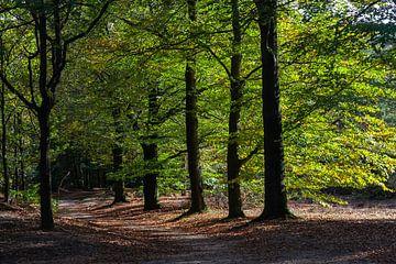 Zonnige dag in het bos bij de Utrechtse Heuvelrug van Nel Diepstraten