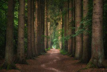 Het Dronkenmands pad van Joris Pannemans - Loris Photography