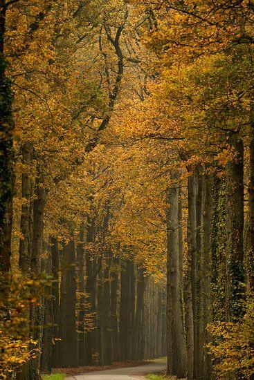 Herfst in volle glorie.  van Francis Dost