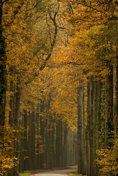 Herfst in volle glorie.