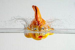 Snelle Nemo van