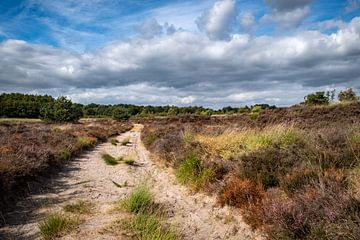 Niederländische Landschaft von Pierre Verhoeven