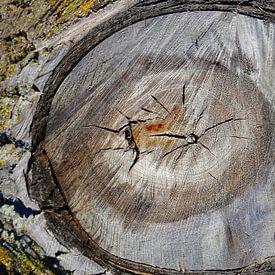 TreeScape 16 van MoArt (Maurice Heuts)