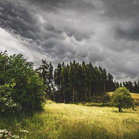 Storm op komst van Sharon Zwart