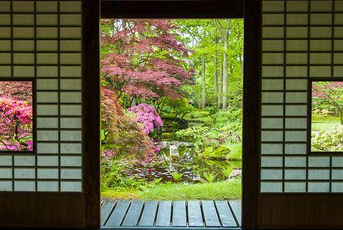 Japanse tuin 5
